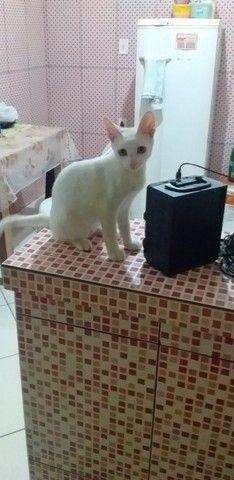 Estou doando esse gatinho.. - Foto 4