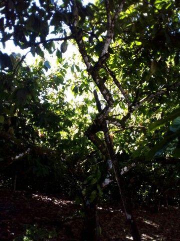 Vendo sítio 1 hectare  - Foto 4