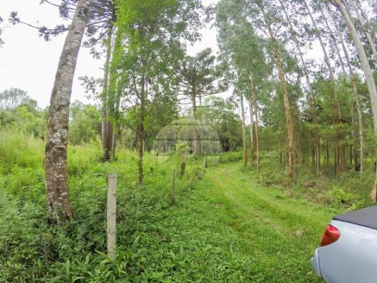 Chácara à venda em Picassinho, Piên cod:136674 - Foto 11