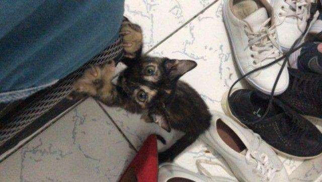 Doa-se gatinhas (castração garantida) - Foto 2