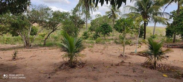 Vende ou troca sítio na cidade de Cuité de mamanguape.medindo60/60. - Foto 5