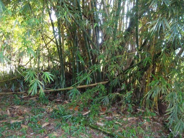 Vende-se varas de bambu taquara, cana da índia e imperial - Foto 5