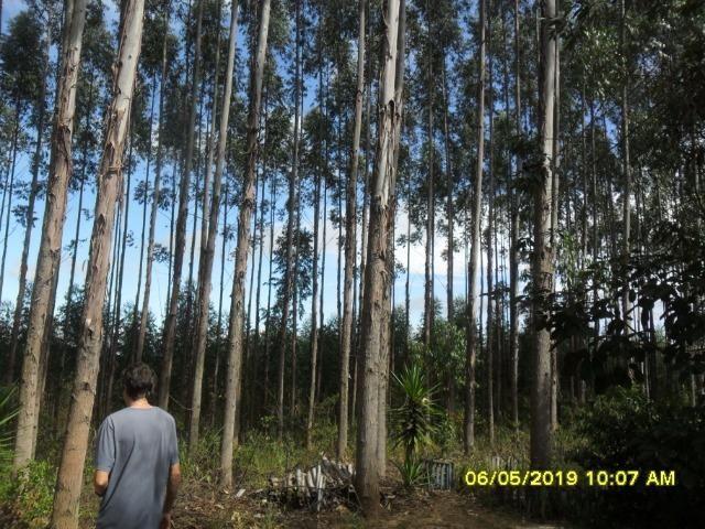 225B/ Maravilhosa fazenda de 235 ha com lindas cachoeiras em Ouro Preto a 76 km de BH - Foto 8