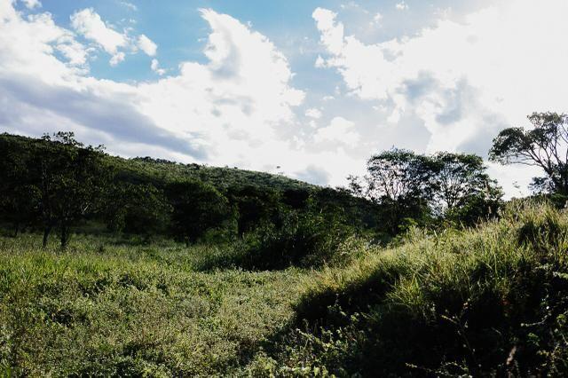 Magnífica fazenda 3.330 tarefas, a 23 km de jequié, br 116 na porta - Foto 11