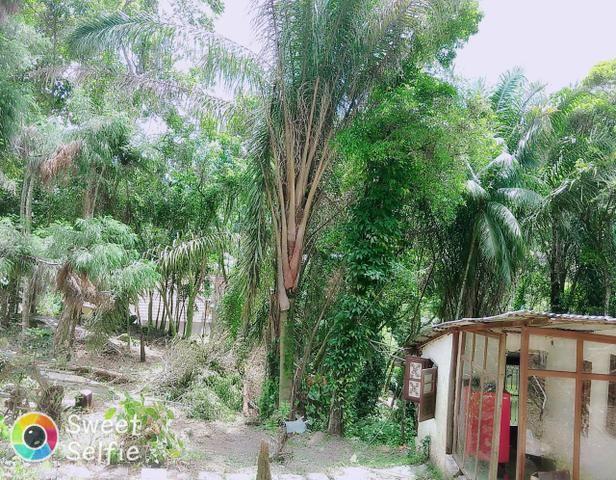 Sítio em Canoas ( pequeno sítio) - Foto 5