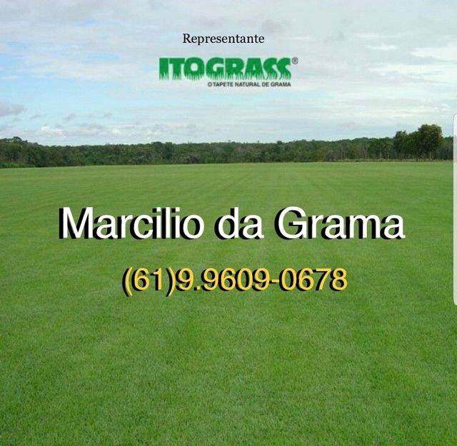Grama Esmeralda Imperial - O melhor preço de Brasília.