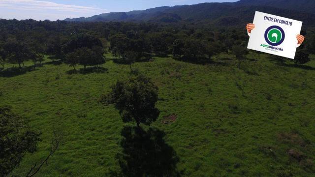 Fazenda região de rosário oeste - Foto 18