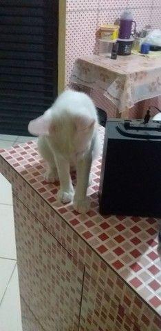 Estou doando esse gatinho.. - Foto 3