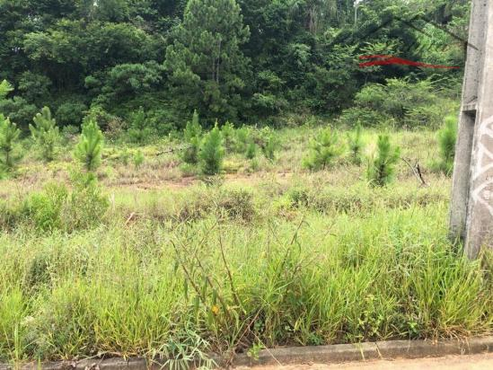 Terreno à venda em Ipiranga, São josé cod:43 - Foto 18