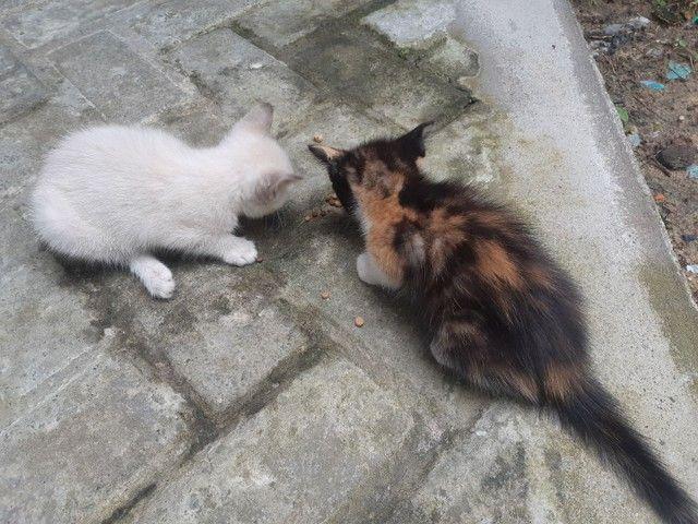 Doa se duas gatinhas fêmeas