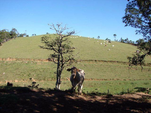 Sorocaba Região Fazenda 200 Alqueires - Foto 12