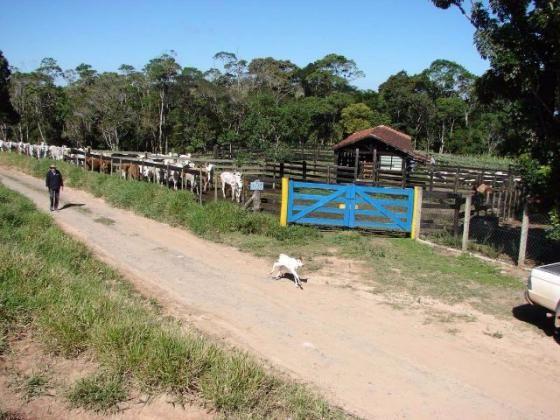 Sorocaba Região Fazenda 200 Alqueires - Foto 6