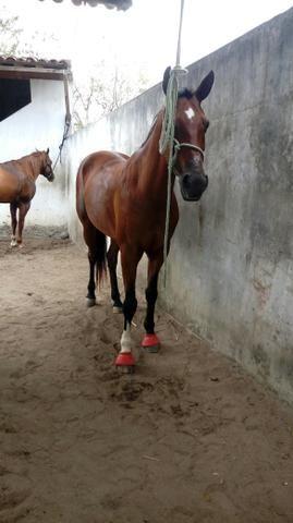 Cavalo professor na esteira