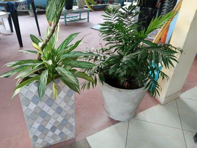 Plantas suculentas - Foto 5