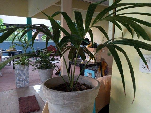 Plantas suculentas - Foto 2