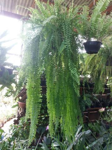 Plantas diversas - Foto 2