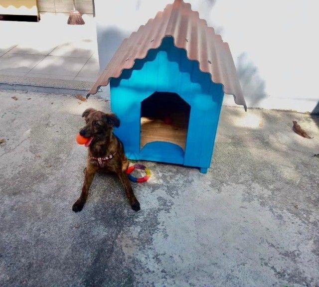 Casa, casinha de cachorro, Casa para Pet do n 1 ao n 6 - Foto 2