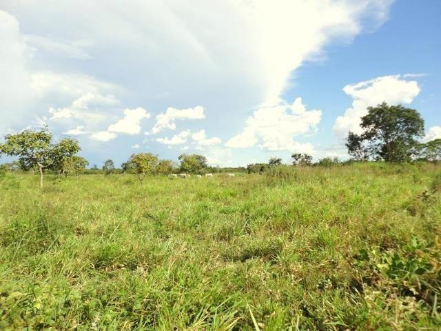 Sitio a 20 km de Cuiabá - Foto 4