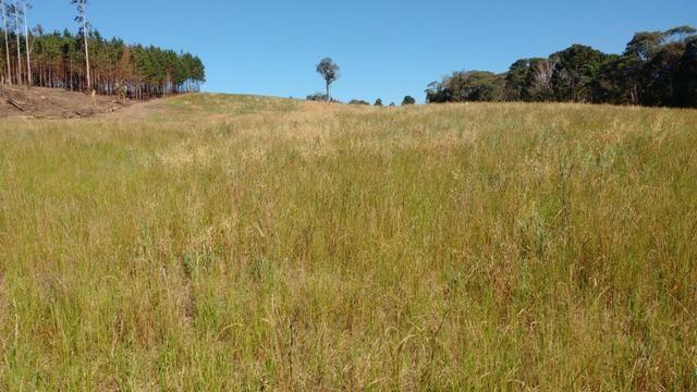 Vendo terreno para chácara ou plantação