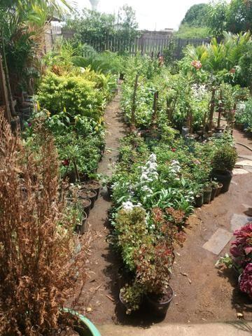 Plantas diversas - Foto 4