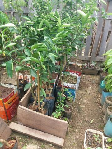 Plantas diversas - Foto 6