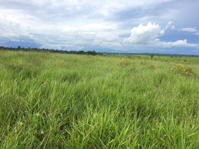 Terra com 54 hectares