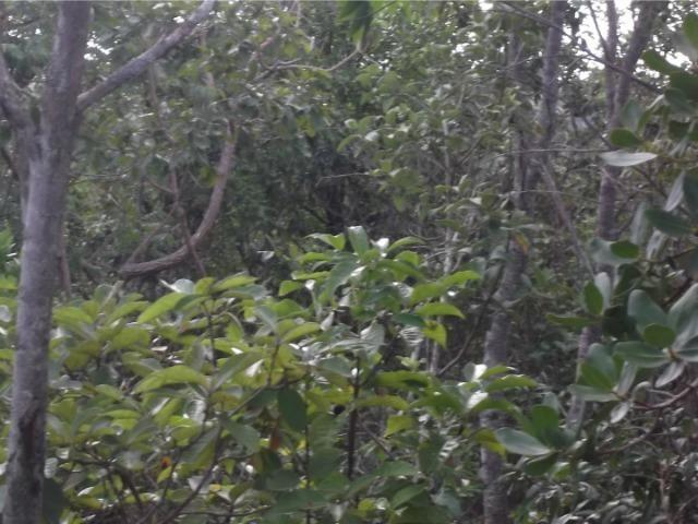 Oportunidade lote de 1.000m a 200m do rio jaboticatubas * WhatsApp - Foto 5