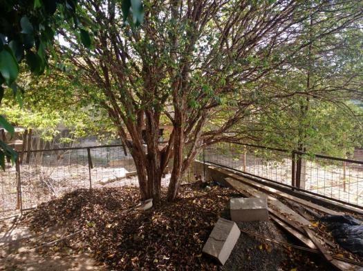 Terreno para alugar com 0 dormitórios em Jardim novo campos elíseos, Campinas cod:TE004486 - Foto 10