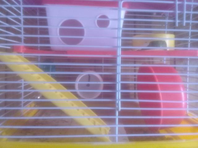 Casa de hamister com um hamister branco macho - Foto 2