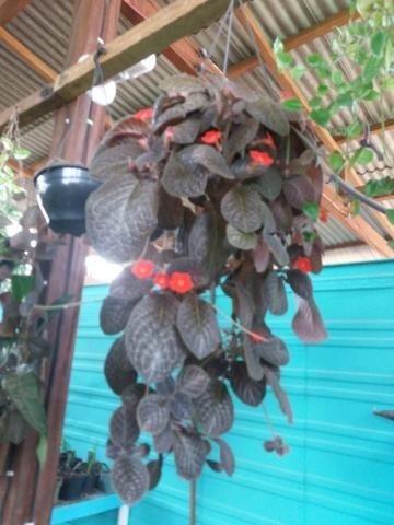 Plantas diversas - Foto 3