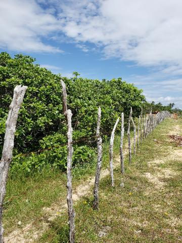 Terreno no Bairro Cearazinho - Luis Correia - PI - Foto 4