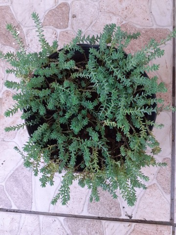 Vendo mudas de plantas ?? - Foto 5
