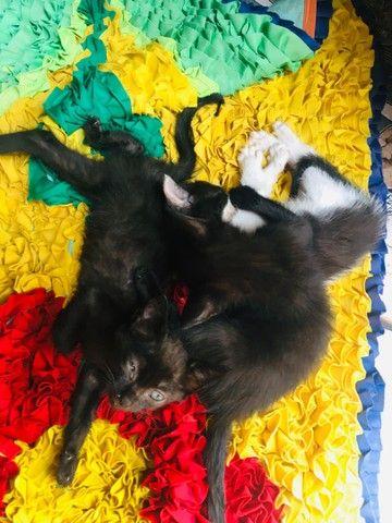 Estou doando esses três filhotes de gato - Foto 2