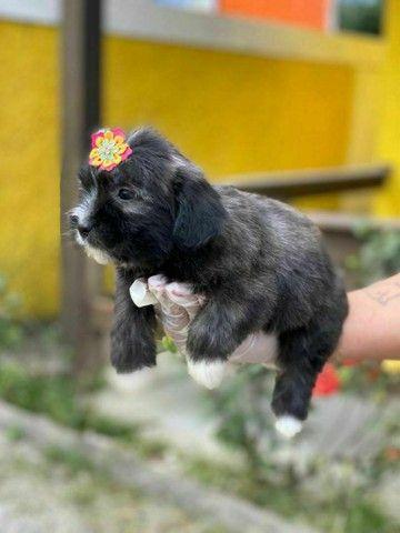 Para sua companhia Lhasa Apso Pedigree na Hora  - Foto 2