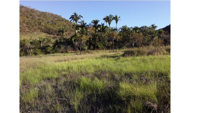 Ocasião,1590 Hectares,1000 hectares Pasto sujo Santo Antônio/MT - Foto 4