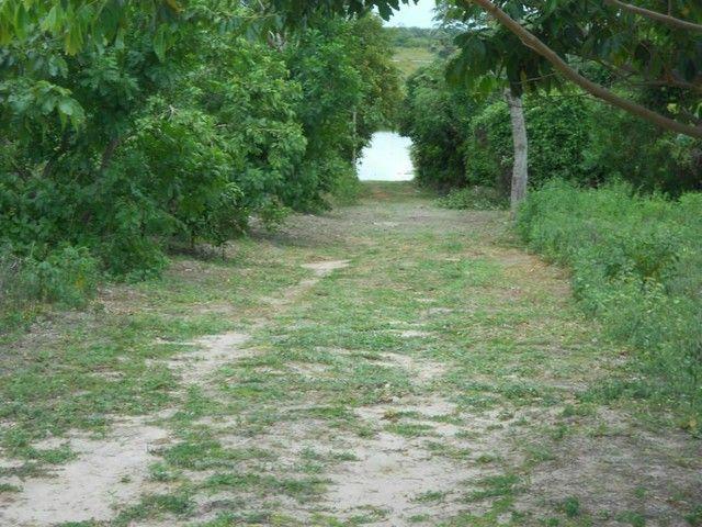 Maravilhoso Rancho/Sitio margens do Rio Paraná - Foto 17