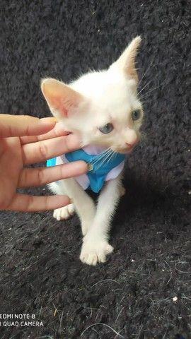 Doação de dois gatinhos machos  - Foto 2