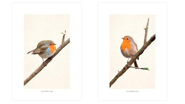 Par Quadro Decorativo 30x42 Sem Moldura Gravura De Pássaros