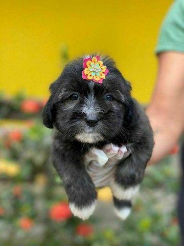 Para sua companhia Lhasa Apso Pedigree na Hora  - Foto 5