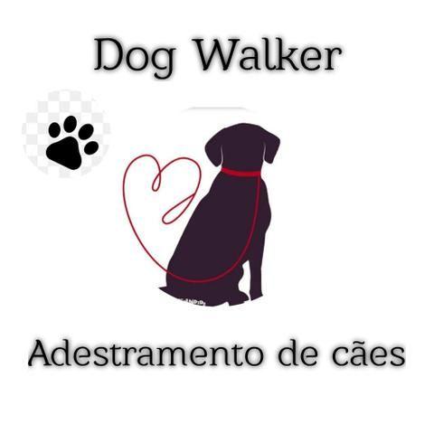 Dog Walker/ Passeador de cães ? - Foto 3