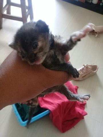 Lindo gatinho - Foto 2