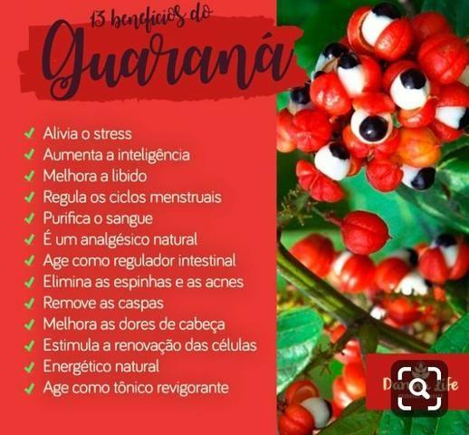 Guaraná de Maués em pó - Foto 3