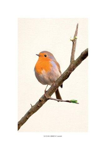 Par Quadro Decorativo 30x42 Sem Moldura Gravura De Pássaros - Foto 3