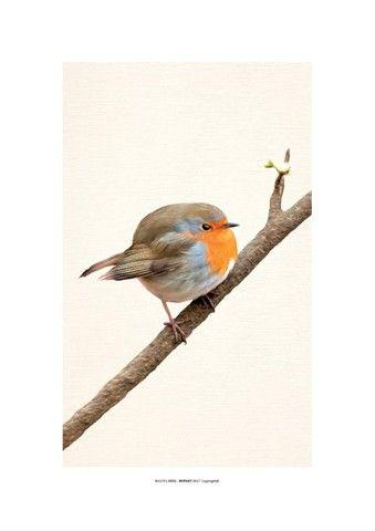 Par Quadro Decorativo 30x42 Sem Moldura Gravura De Pássaros - Foto 2