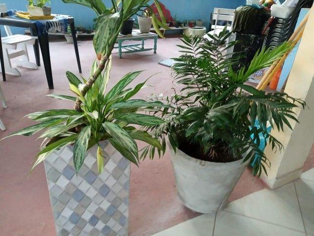Plantas suculentas - Foto 6