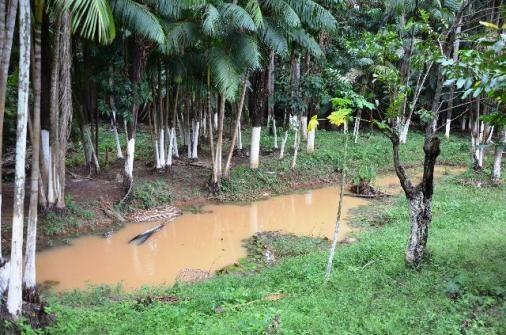 Chácara no Maracanã - Cód.: 1194 - Foto 12