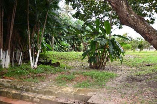 Chácara no Maracanã - Cód.: 1194 - Foto 15