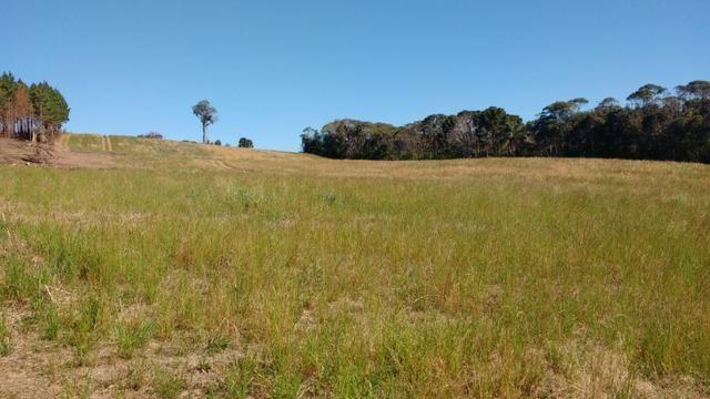Vendo terreno para chácara ou plantação - Foto 4