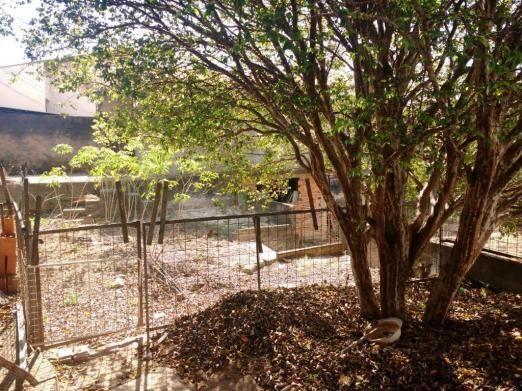Terreno para alugar com 0 dormitórios em Jardim novo campos elíseos, Campinas cod:TE004486 - Foto 9
