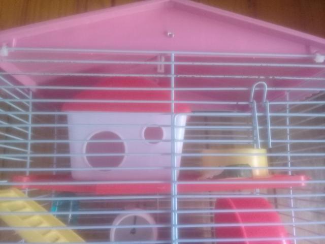 Casa de hamister com um hamister branco macho - Foto 3